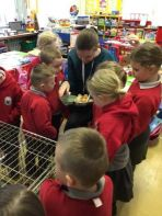 Chirpy Chickens and Cheerful Children in P1&2